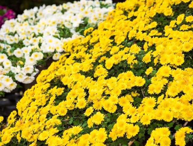 安い葬儀を決めるポイントとおすすめの祭壇を紹介